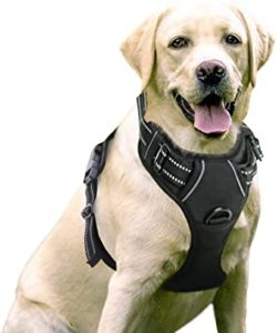 Best Dog Harness   Review & Guide